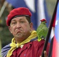 chavez_parrot5.jpg